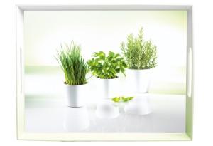 Emsa Tablett, 50x37cm, Herbs